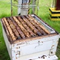 https://www.airfield.ie/wp-content/uploads/2019/02/Bee-Keeping-frames-min.jpg