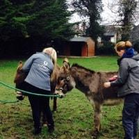 https://www.airfield.ie/wp-content/uploads/2019/02/Donkey-Grooming-at-Airfield-Estate-min.jpg
