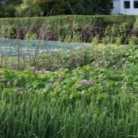 https://www.airfield.ie/wp-content/uploads/2019/02/Mid-Summer-Veg-Patch-Airfield-min.jpg
