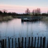 Woodland and Pond