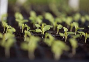 Seeds Sprouting Organic production