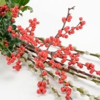 https://www.airfield.ie/wp-content/uploads/2019/09/Christmas-foliage-small-image-min.jpg