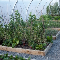 https://www.airfield.ie/wp-content/uploads/2019/12/Polytunnel-Layout-Example-1.jpg