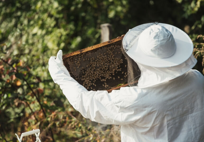 https://www.airfield.ie/wp-content/uploads/2020/05/Bee-Keeping-Course-Online-Image-1.jpg