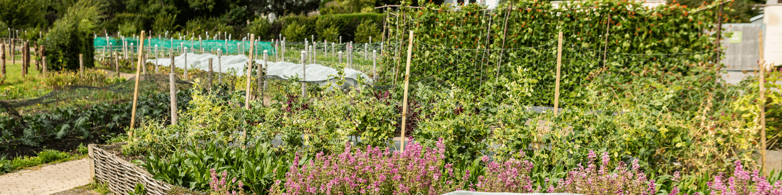 https://www.airfield.ie/wp-content/uploads/2020/10/Organic-Food-Garden-Image-Web-Header-1.png