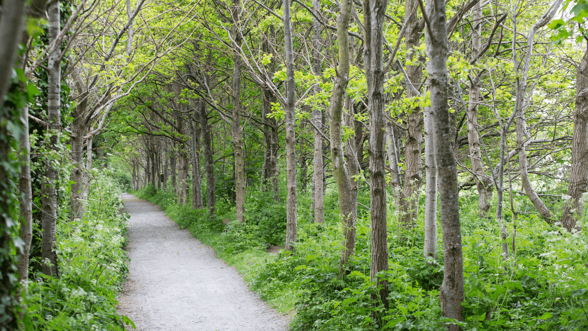 https://www.airfield.ie/wp-content/uploads/2021/04/Carbon-Footprint-Journey-Native-Woodland-at-Airfield-Estate-1.png