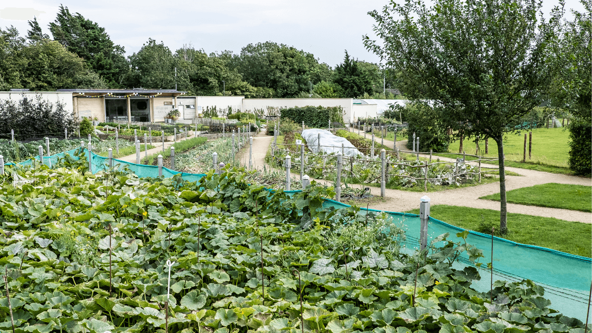 https://www.airfield.ie/wp-content/uploads/2021/04/Food-Gardens-at-Airfield-Estate-1.png
