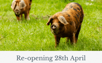 Protected: Reopening April 2021