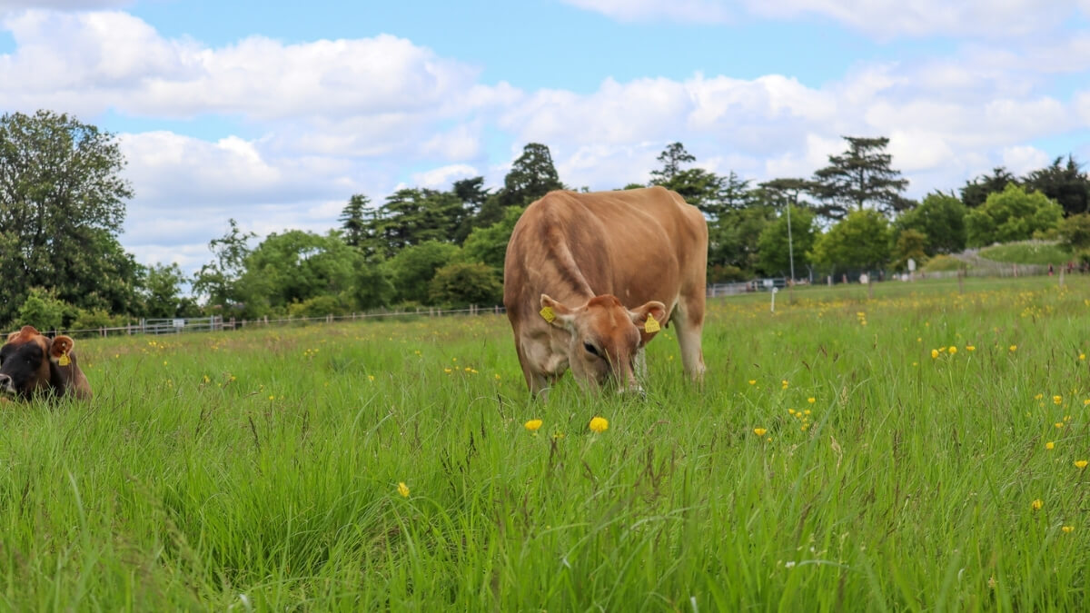 https://www.airfield.ie/wp-content/uploads/2021/06/Regenerative-Farming-Airfield-Estate-1.jpg